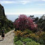 Wandern-spring