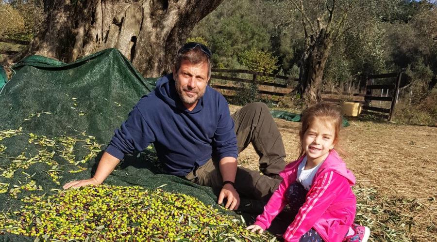 Olivenernte-xs