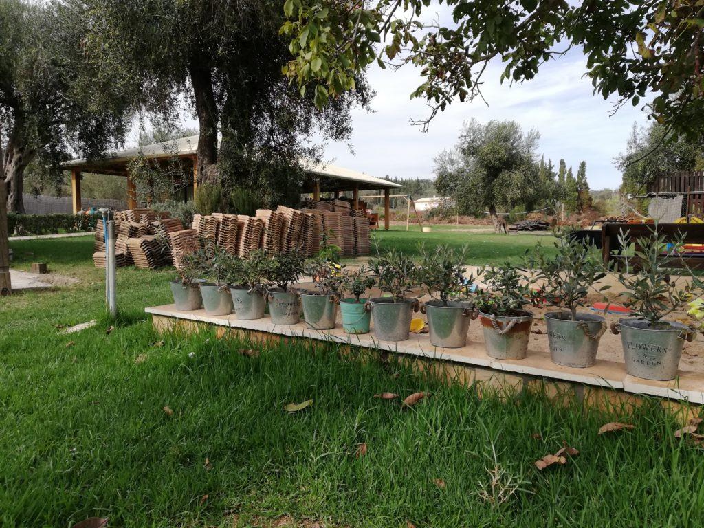 Umbau 2019 alte Dachziegeln und Olivenbaum-Pflanzen